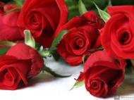43-Rose_927544_3452267895424