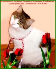 Un brat de flori...
