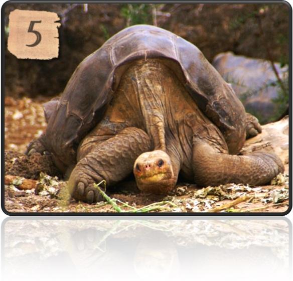 TOP 10 - Cele mai longevive fiinte de pe Terra